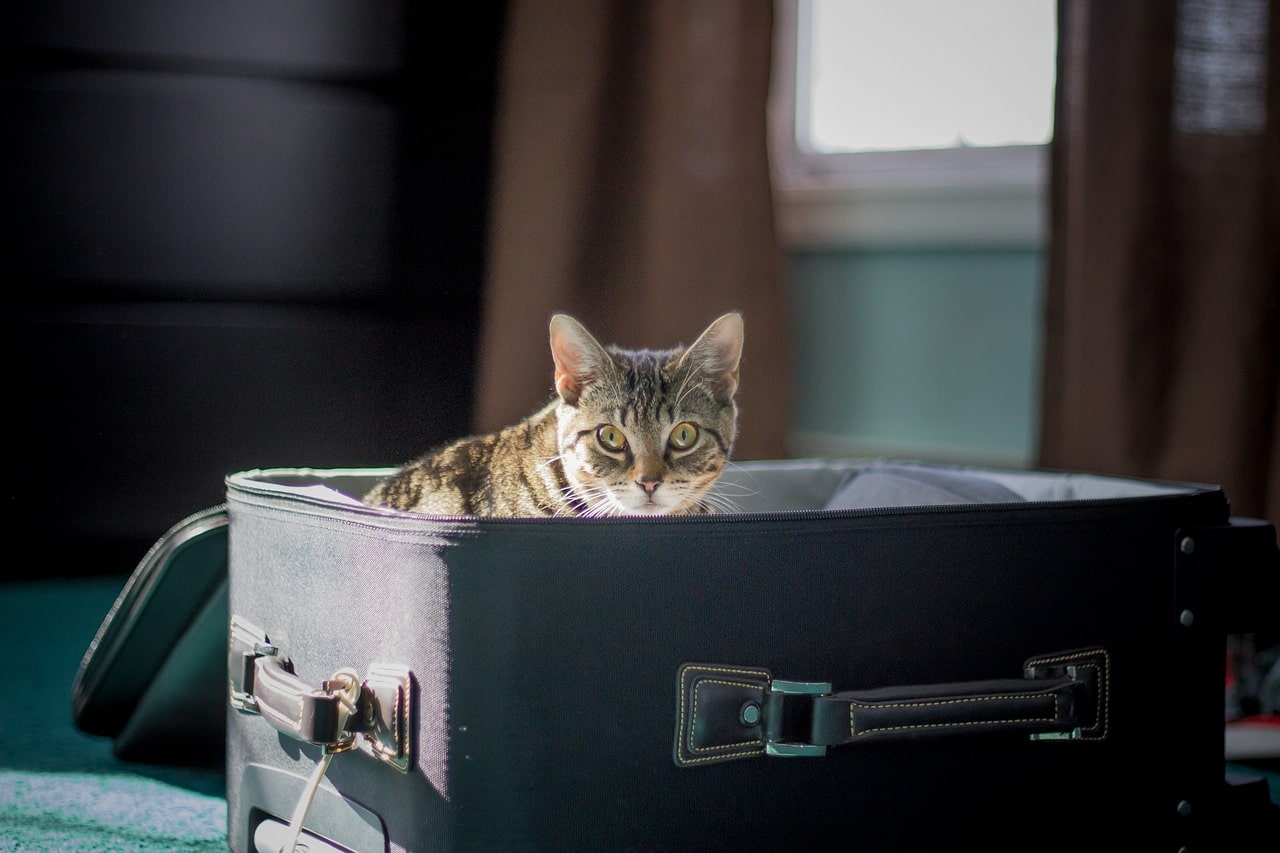 Cat in a suitcase from the article Moving with Your Pet to a New Home