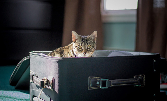 Moving with Your Pet to a New Home