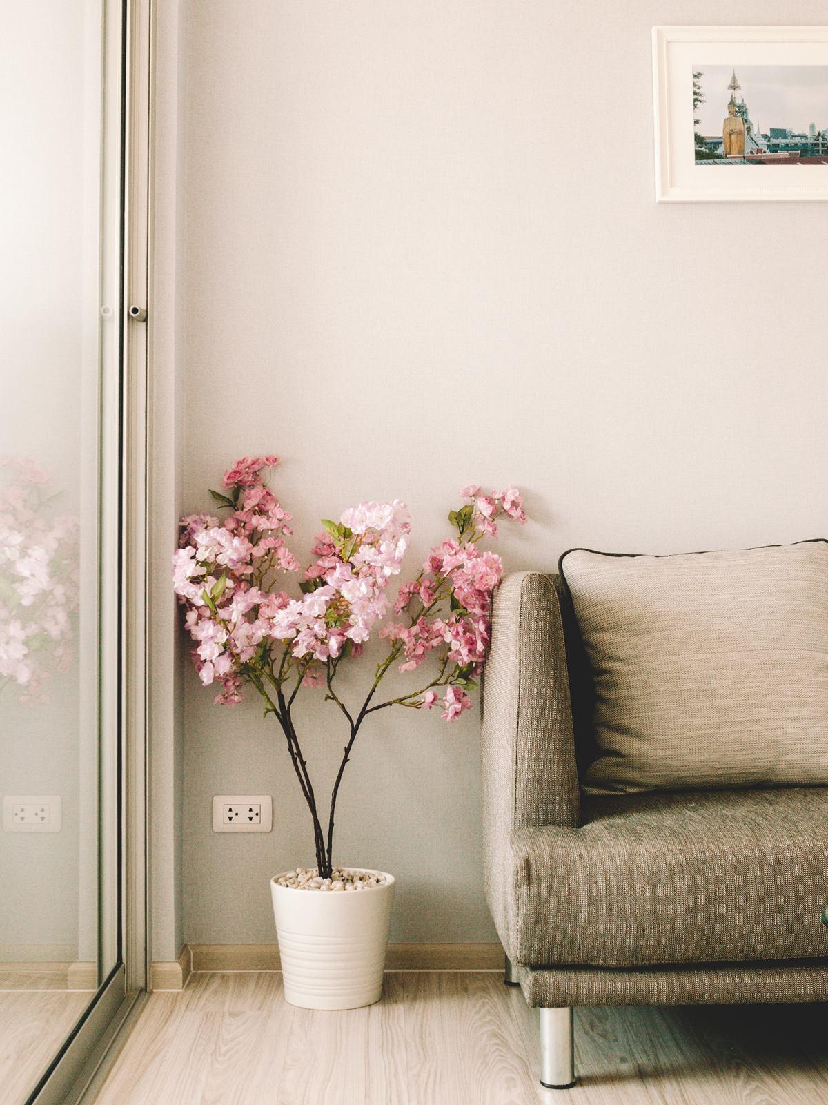 Indoor potted flower