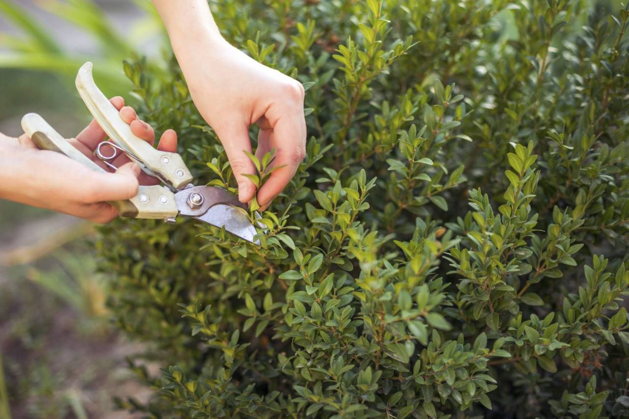 Pruning plants in Spring