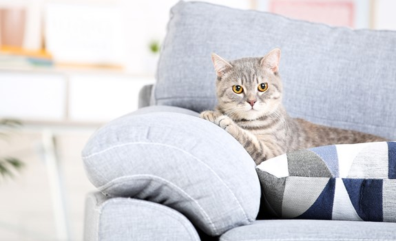 11 Useful Tips to Layout Your Space with Your Pets in Mind
