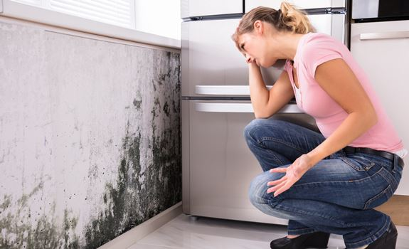 Mold Prevention Training for Homeowners